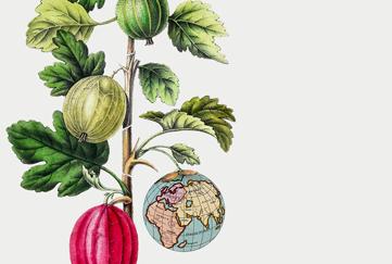 Hållbarhetsräkna dina måltider